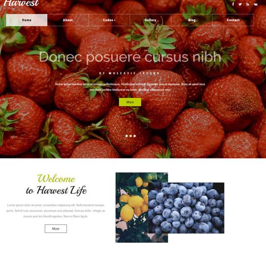 果蔬专卖的网站模板_亿码酷站