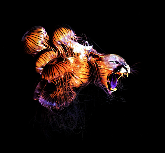 JoanCharmant的图象合成艺术_亿码酷站___亿码酷站平面设计教程插图5